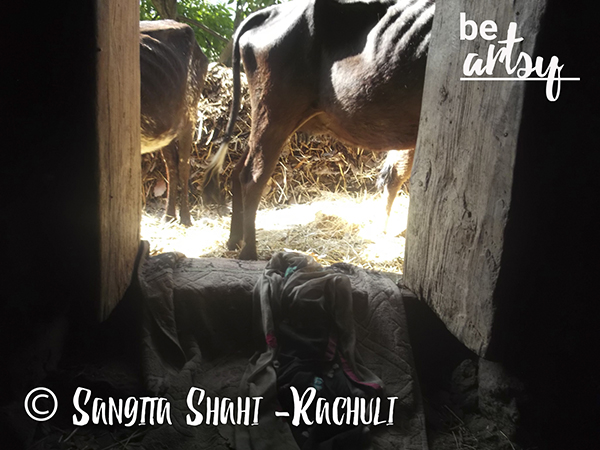 Sangita Shahi -Rachuli -from-the-cowshed -